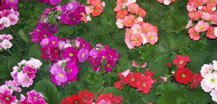 Plantas anuales que florecen en verano -