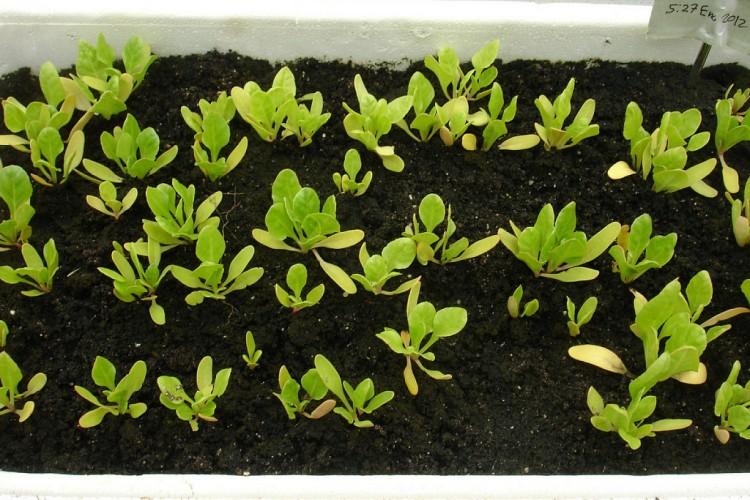Pasos para sembrar las semillas -