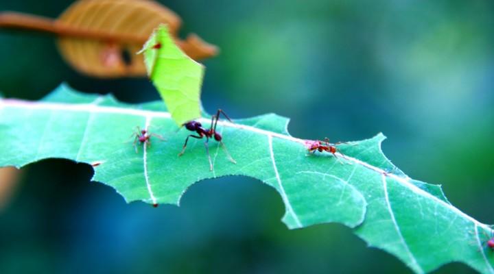 Remedios caseros contra plagas en el jardín y huerto