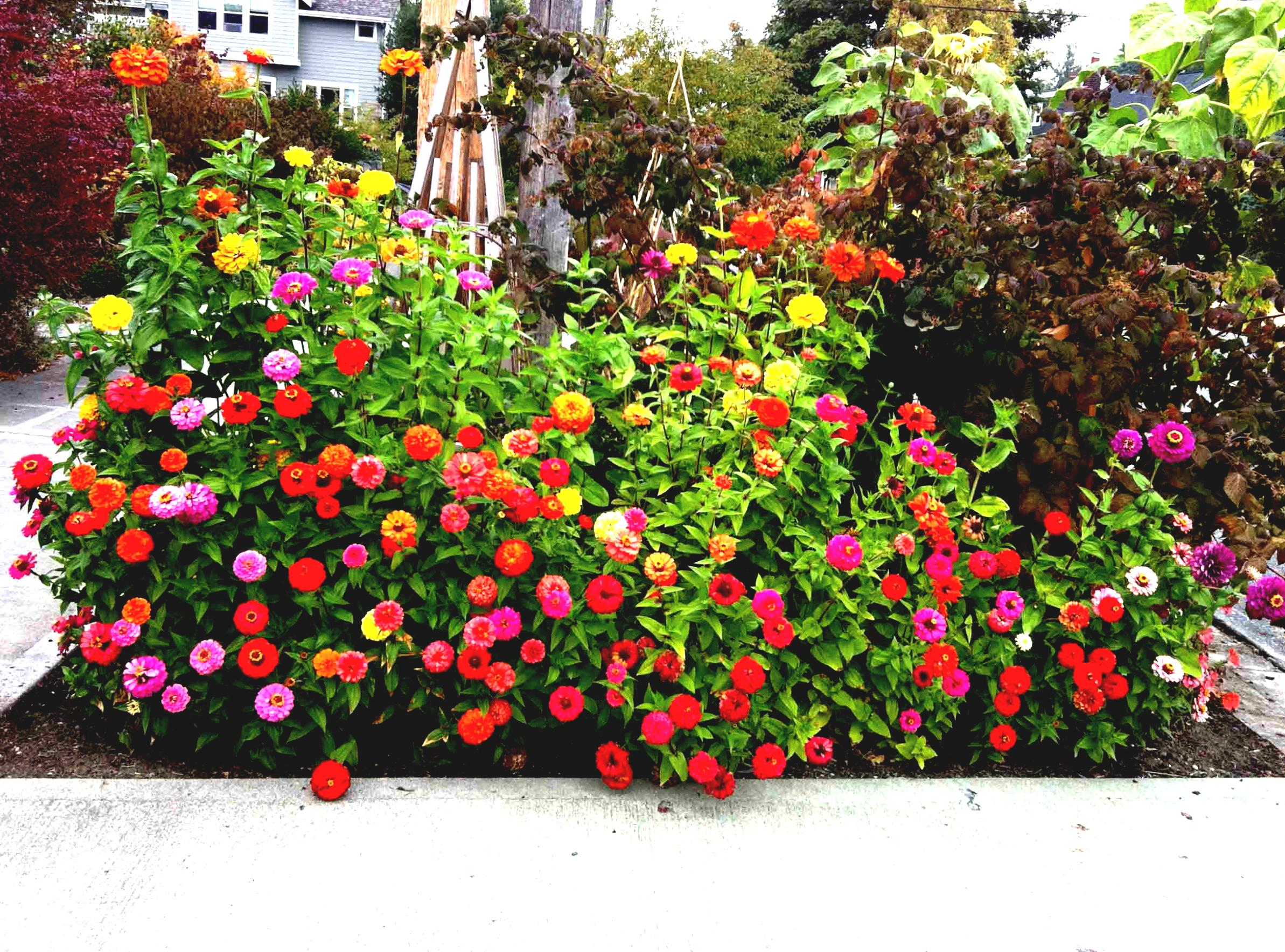 Dise o de jardines peque os y modernos plantas Better homes and gardens flower bed designs