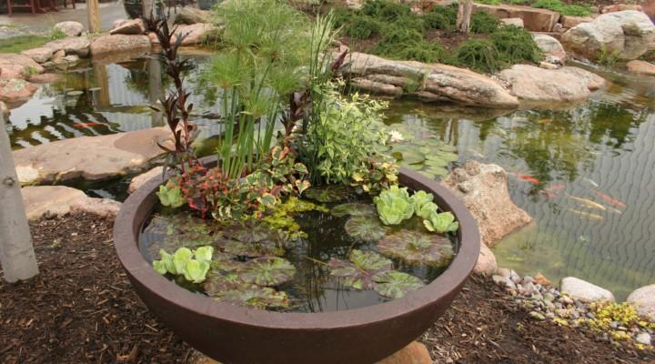 Jardínes acuáticos de interior