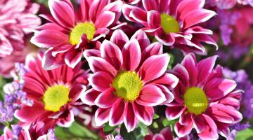 Propagación o reproducción de las plantas de interior