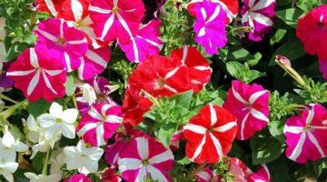 calor y la luz en el crecimiento de las flores